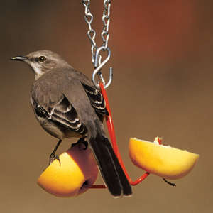 Fruit Feeder picture