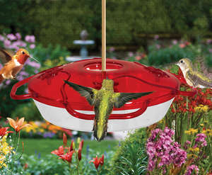 Little Flyer 4 Hummingbird Feeder picture
