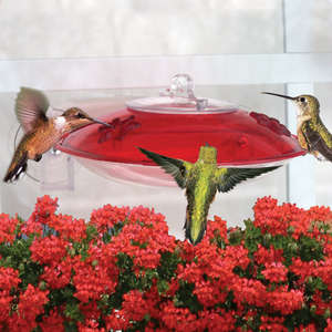Window Hummer 3 Hummingbird Feeder - 2 Ports picture