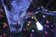 Alki Lantern + Flashlight™ additional picture 3