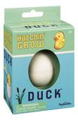 Hatchin Grow Duck