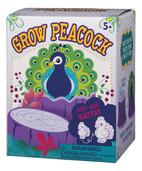 Grow Peacock