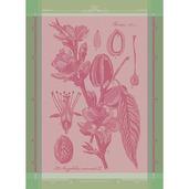 """Fleurs D'Amandier Rose Kitchen Towel 22""""x30"""", 100% Cotton"""