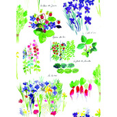 "Mille Fraisiers Printemps 20""x28"" Kitchen Towel, 100% Cotton"