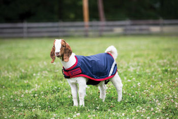 Horseware Goat Coat picture