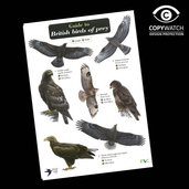 FG21 Field Guide - British Birds of Prey