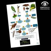 FG12 Field Guide - Bugs