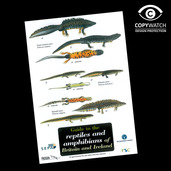 FG7 Field Guide - Reptile & Amphibians