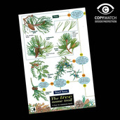 FG2 Field Guide - Trees