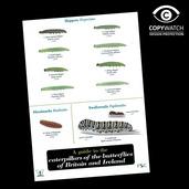 FG5 Field Guide - Caterpillars ( Butterflies )