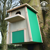 Barn Owl Nest Box 2017 FREE P&P