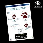 FG11 Field Guide - Mammal Tracks & Signs