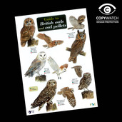 FG20 Field Guide - Owls & Owl Pellets
