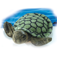 Sea Turtle picture