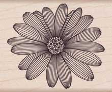 Etched Daisy picture
