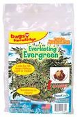 Everlasting Evergreen