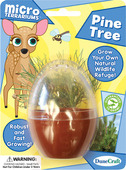 Grow Your Own Pine Tree