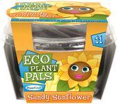 Sandy Sunflower