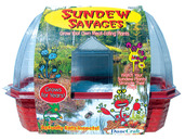 Sundew Savages