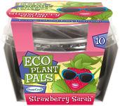 Strawberry Sarah