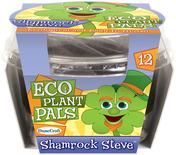 Shamrock Steve