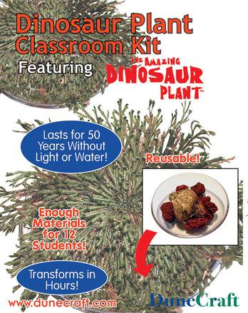 Dinosaur Plant Classroom Kit picture