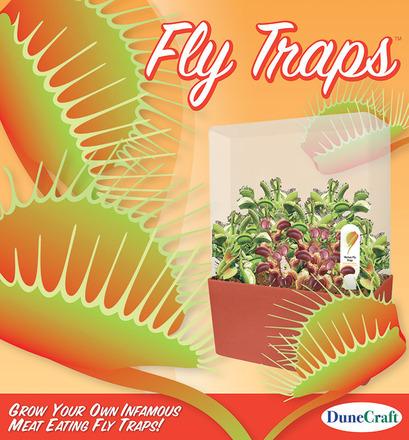 Fly Traps picture