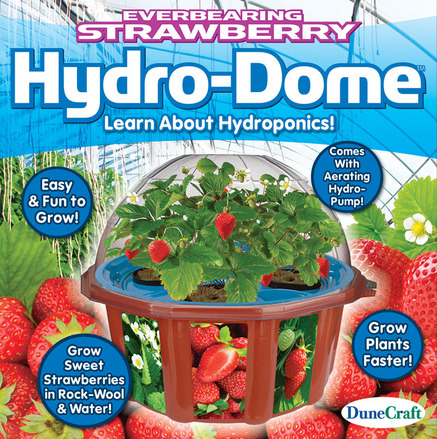 Everbearing Strawberry Hydro-Dome picture