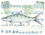 Boat Box Decal - Currier's Bonefish