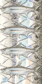 Currier's Tarpon - IN STOCK