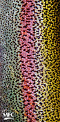 Rainbow Trout Skin - OUT OF STOCK