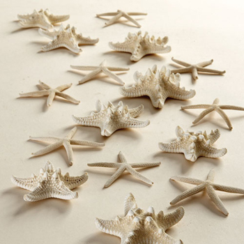 Set of 16 Starfish Assorted Finger & Knobby Starfish picture