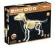 4D Full Skeleton Dog