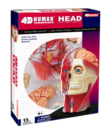 4D Human Anatomy Head Model picture