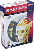 4D Human Anatomy Cranial Nerve Skull