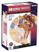 4D Human Anatomy Female Reproductive System