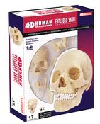 4D Human Anatomy Exploded Skull
