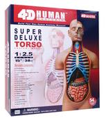 4D Human Anatomy Deluxe Torso