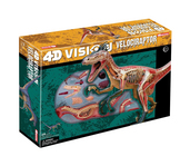 4D Vison Velciraptor Anatomy Model