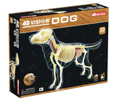 4D Full Skeleton Dog