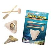 Shark Teeth Dig