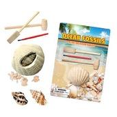 Ocean Fossil Dig