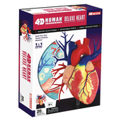 4D Human Anatomy Deluxe Heart Model