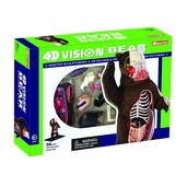 4D Vision Brown Bear