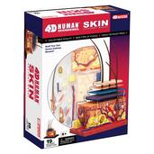 4D Human Anatomy Skin Model