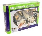 4D Vision Crocodile Anatomy Model