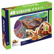 4D Vison Snail Anatomy Model