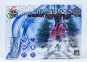 Human Anatomy Adventure Kit