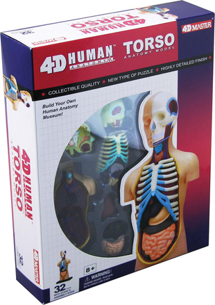 4-D Human Torso Anatomy Model picture