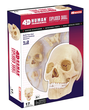 4D Human Anatomy Exploded Skull picture